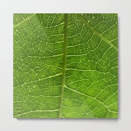 Fig Leaf Metal Print