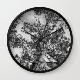 The old eucalyptus tree Wall Clock