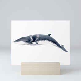 Baby Minke whale Mini Art Print