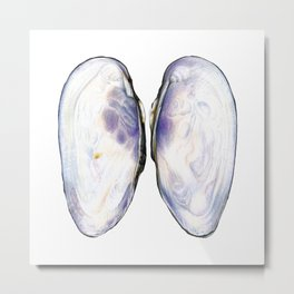 Thick Shelled River Mussel (Unio crassus), inner side Metal Print