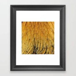 Fancy Rooster Feathers Framed Art Print
