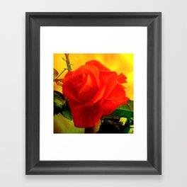 Rote Rose Framed Art Print