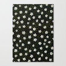 White Spring Flowers Canvas Print