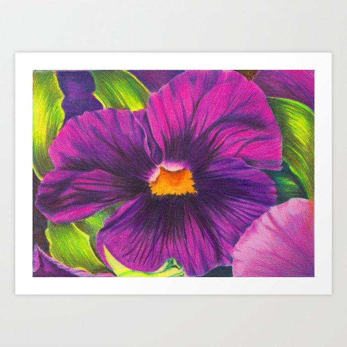 Purple Pansy Flower Colored Pencil Drawing Art Print By Sacredsemita