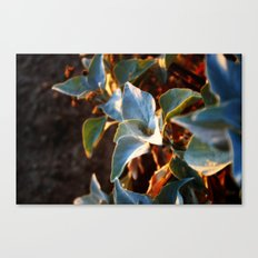 Desert Leaves II Canvas Print