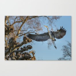Free like the Wind Canvas Print