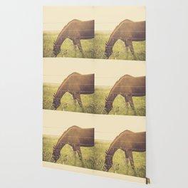 Texas Horse Grazing Wallpaper