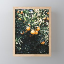 Oranges   Moody colorful travel photography   Botanical green wall with oranges Framed Mini Art Print