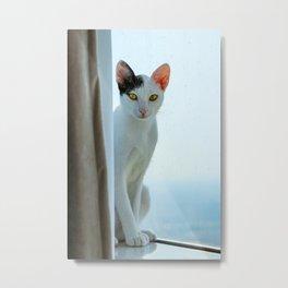Cat By A Window Metal Print