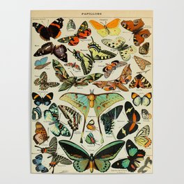 Butterfly Vintage Scientific Illustration French Language Encyclopedia Lithographs Educational Diagr Poster
