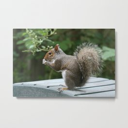 Visiting Squirrel Luncheon (Photography: Critters and Creatures) Metal Print