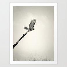 Red-Tail Hawk on Columbia River, Washington, Bird, Wildlife Art Print