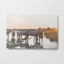 Camargue Horses VI Metal Print