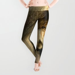 African Lion Leggings