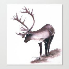 Lone Caribou Canvas Print
