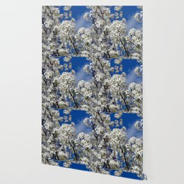 Bradford Pear Blooms Wallpaper