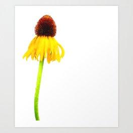 Summer Daisy Art Print