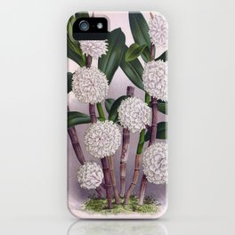 Vintage White Orchid Dendrobrium Purpurem Candidulum Lindenia Collection iPhone Case