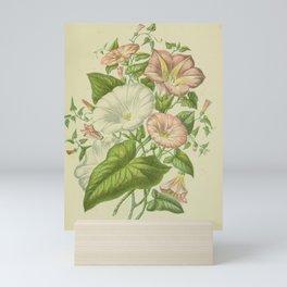 067-FIELD BIND-WEED, GREAT BIND-WEED, SEA BIND-WEED Mini Art Print