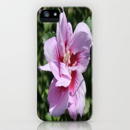 Double Headed Marsh Mallow Althaea Officinalis  iPhone Case