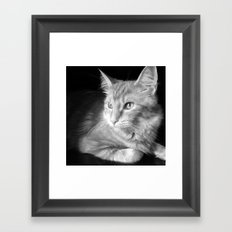 Classic Cat Clementine  Framed Art Print