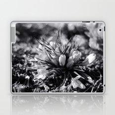 Sunlit Crocus in Black and White Laptop & iPad Skin