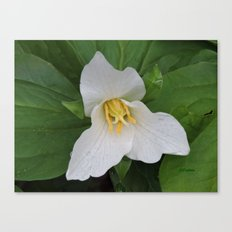Trillium in the Rain Canvas Print