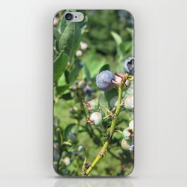 Blueberry Plant iPhone Skin