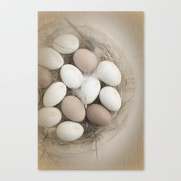 Sketch of eggs in a nest Canvas Print