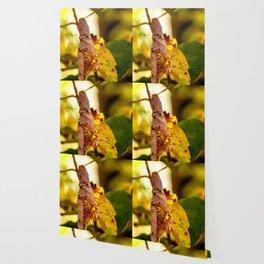 The leaf Wallpaper