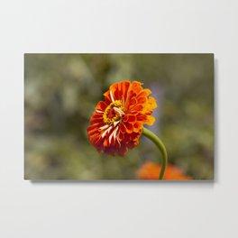 Orange Gerber Metal Print