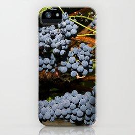 Grapes Vineyard iPhone Case