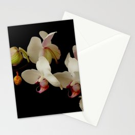 White orchid flowers with black background Stationery Cards