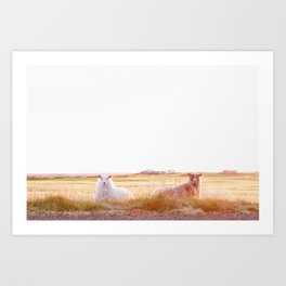 Sheep in Iceland at Sunrise Art Print