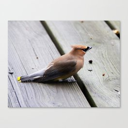 Beautiful Waxwings II-Birds Canvas Print