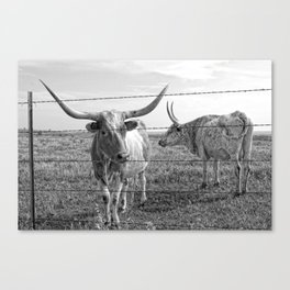 Longhorn Cows Canvas Print