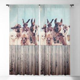 ALPACA ALPACA ALPACA Blackout Curtain
