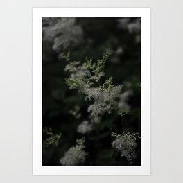 Soft as a Whisper Art Print
