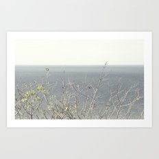Branches at the sea Art Print