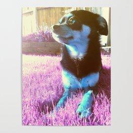 Blue dog on pink grass. Poster