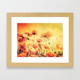Poppies in the Sunlight Framed Art Print