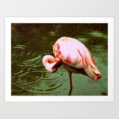 Greater Flamingo. Art Print