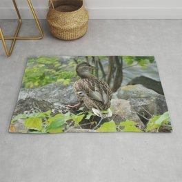 Duck on the Rocks (Common Mallard) Rug