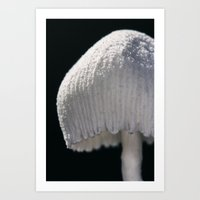 White Mushroom Art Print