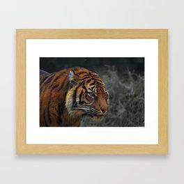 tiger on the hunt Framed Art Print