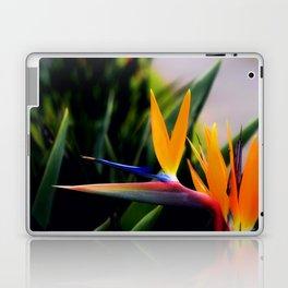 Strelitzia Laptop & iPad Skin