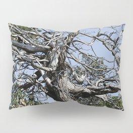 SUN-BLEACHED WINDSWEPT JUNIPER Pillow Sham