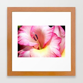 Pink Gladiola Framed Art Print