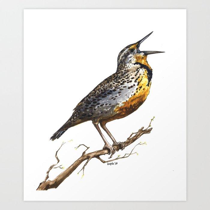 Western Meadowlark Art Print By Baylaart
