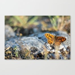 Beautiful orange-black colored butterfly Canvas Print